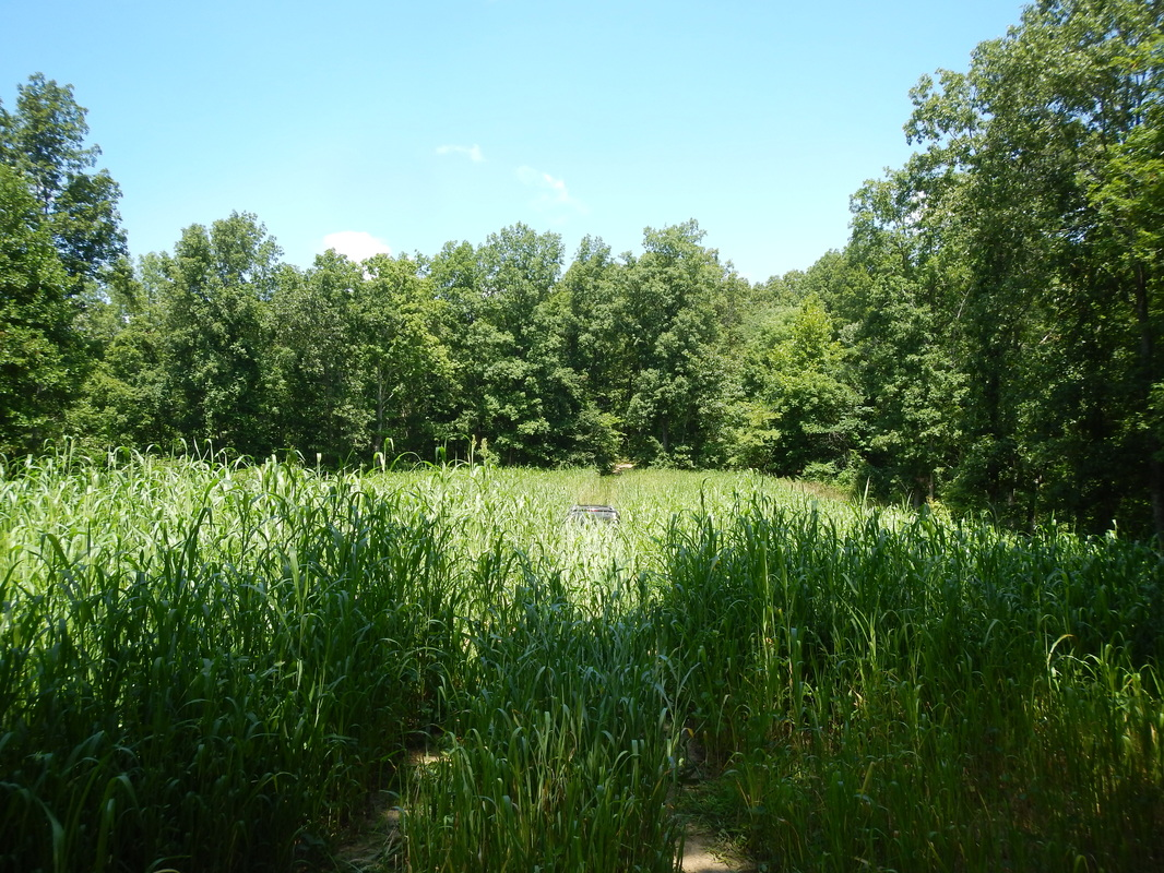 Food Plots Over Time And Building Soil Missouri Whitetails